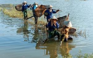 Bản sắc Việt: Đậm đà mắm tép đồng chiêm