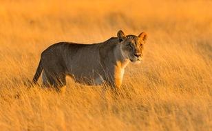 Sắc màu hoang dã Namibia