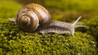Chất nhầy của ốc sên có tác dụng như thế nào?