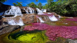 Caño cristales: Dòng sôngcầu vồng kì lạ ở Colombia