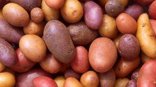 Người đàn ông trồng hơn 400 loại khoai tây ở Peru