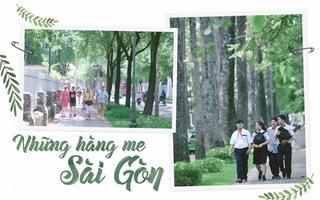 Những hàng me Sài Gòn