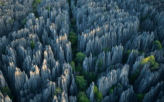 """Khu rừng """"gồ ghề"""" ở Madagascar"""