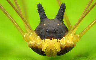Loài sinh vật kì lạ sống lâu hơn cả khủng long