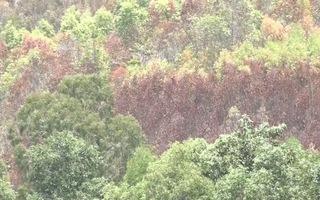Quảng Ngãi: 62 vụ cháy rừng, cần hơn 17 tỷ đồng khôi phục