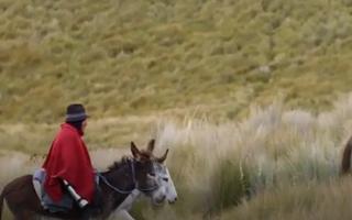 Video: Người đàn ông cưỡi lừa lên núi khai thác đá lạnh