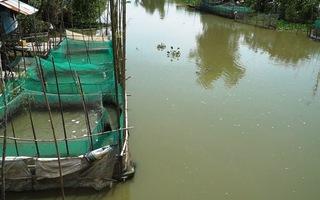 Phút cảnh báo: Bùng phát nuôi cá ngoài quy hoạch dân nông thôn thấp thỏm