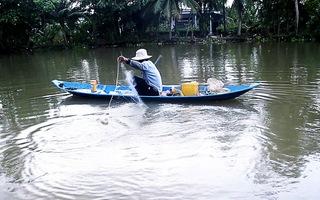 Nhộn nhịp mùa thả lưới bắt cá mè vinh trên sông