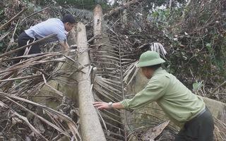 Nhức nhối tình trạng phá rừng tại Thanh Hóa