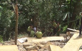 Điều tra vụ phá rừng đặc dụng tại Đắk Lắk