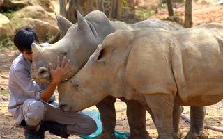 """Tin nóng 24h: """"Ngôi nhà hạnh phúc"""" của động vật hoang dã ở Vinpearl Safari"""