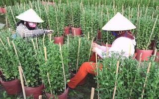 Hàng trăm lao động nhàn rỗi có thêm thu nhập từ mùa hoa Tết