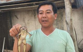 Video: Chuyện lạ về con ếch không đầu ở Sóc Trăng