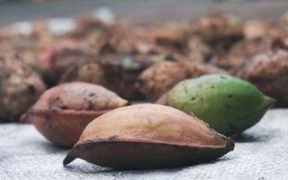 Góc nhìn trưa nay | Cựu tù Côn Đảo kể lại chuyện lén ăn lá, quả bàng