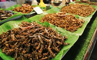 Ẩm thực côn trùng chiên giòn ở Thái Lan