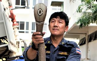 Công việc bắt rắn của những người lính cứu hỏa ở Bangkok