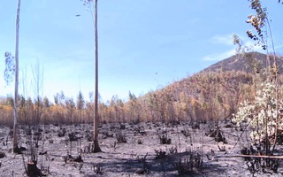 Phú Yên xảy ra 68 vụ cháy, hơn 1.000 ha rừng bị thiệt hại