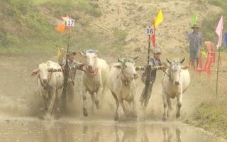 Đua bò dân dã - nguồn cảm hứng của nhiếp ảnh