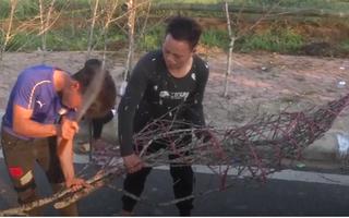 Video: Độc đáo chợ đào rừng Mộc Châu