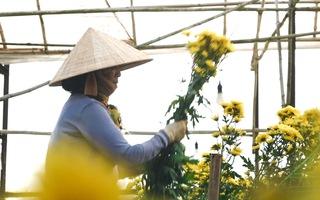 Nhọc nhằn bên những vựa hoa Tết