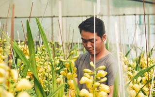 Góc nhìn trưa nay   Hoa lan được trồng từ công nghệ cao rộn ràng vào vụ Tết