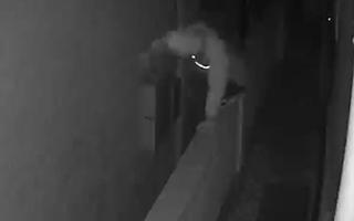 Video: Trộm đột nhập lấy két sắt của nữ ca sĩ Goo Hara