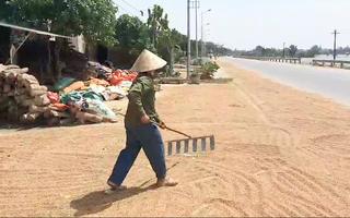 Video: Người dân Quảng Bình tìm mọi cách cứu lúa