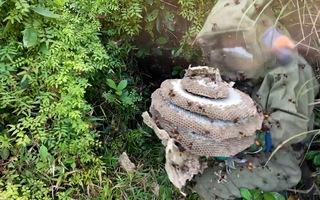 Trúng luồng ong vò vẽ 'khủng' hàng chục tổ ở miền Trung