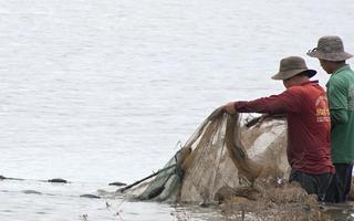 Video: Kéo lưới bắt cá đồng mùa nước nổi