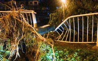 Video: Mưa lớn khiến hàng loạt cây cối ở TP.HCM đổ ngã