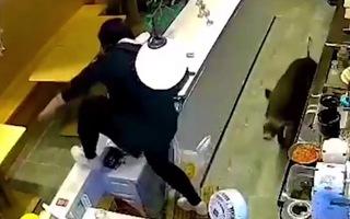 Video: Heo rừng xông vào cửa hàng, phóng qua quầy thu ngân 'rượt đuổi' nhân viên