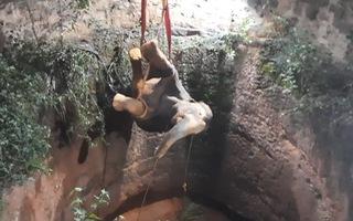 Video: 15 giờ nghẹt thở giải cứu voi rơi xuống giếng sâu 18m