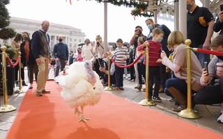Video: Trải thảm đỏ chào đón gà tây ở khách sạn hạng sang chờ Trump xá tội