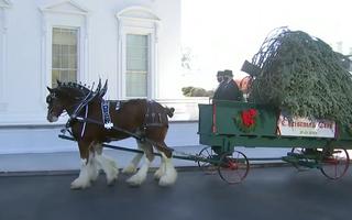 Video: Ngắm cây thông chào đón giáng sinh Nhà Trắng