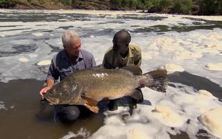 Săn cá rô sông Nile khổng lồ trên dòng nước xiết