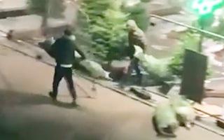 Video: 3 tên trộm lấy đi 300 cây thông noel trước ngày mở bán