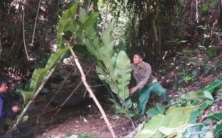 Video: Sinh tồn trong rừng, làm lán qua đêm và săn cua suối
