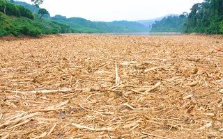 Video: Sau lũ, gỗ trôi nổi kín lòng hồ thủy điện Đăk Mi 4