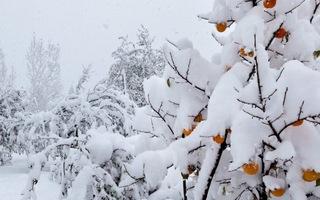 Video: Ngắm thành phố - 30 độ C, tuyết trắng bao trùm ở Nga