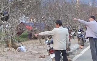 Video: Nghiêm cấm chặt đào rừng chơi tết