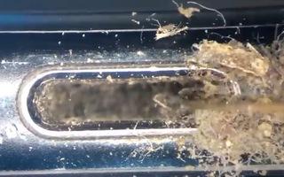 Video: Ớn lạnh với iPhone 'siêu bẩn' dưới kính hiển vi