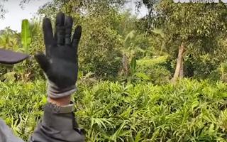 Video: Ai đã che giấu Tuấn 'khỉ' trong 13 ngày lẩn trốn ?