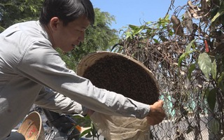 Thú vị nghề săn ong rừng
