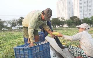 Người miền Tây lên Sài Gòn thuê đất 'dự án' làm rẫy