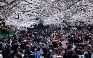 Video: Hàng ngàn người Nhật đổ xô đi ngắm hoa anh đào, bất chấp cảnh báo COVID-19