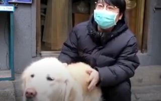 Video: Cảm động chú chó đưa cơm cho chủ mỗi ngày giữa tâm dịch COVID-19