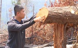 Video: Gần 6000 héc ta rừng bị hủy hoại hàng loạt