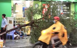 Video: Mưa lớn tại TP.HCM, nhiều cây xanh ngã đổ nằm la liệt