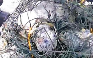 Video: Giải cứu rùa biển mắc kẹt trong hàng trăm kg dây lưới và rác