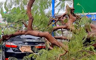 Video: Mưa to kèm gió giật, cây cối ngã đầy đường, đè lên ôtô ở Cần Thơ